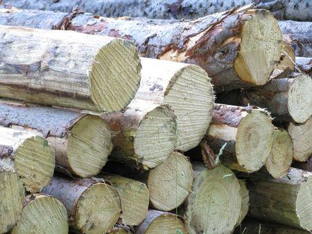 timbre: Pine poles