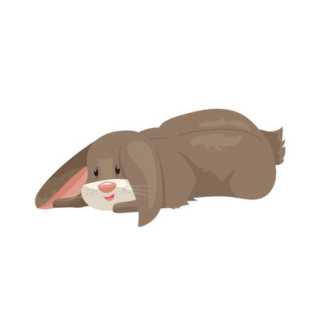 vector illustration of cartoon rabbits of different breeds. Lovely rabbits for veterinary design. Gray, red and white rabbits. Cheerful, soft, fluffy