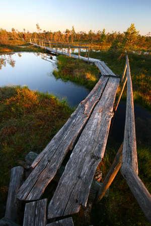Tree Footbridge Durch Sumpf im Sonnenuntergang Standard-Bild - 1655919