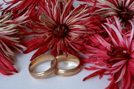 Chrysanthemum flowers and two golden wedding rings photo