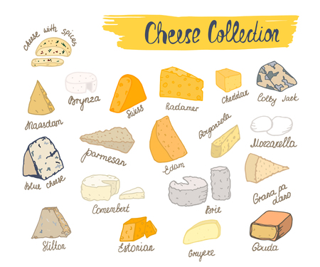 Cheese collection illustration of cheese types in hand drawn style.