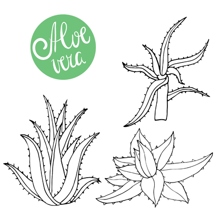 Collection of hand drawing aloe isolated on white. Vector doodle aloe vera