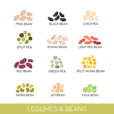 豆およびマメ科植物セット。白で隔離のベクトル図