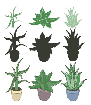 indoor bud: Aloe vera in pots isolated on white. Set of different type Aloe Vera with silhouettes. Vector illustration Illustration