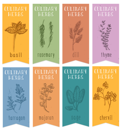 tarragon: Set of 8 herbal labels on hand drawn sketch. Vertical banners with basil, chervil, rosemari,dill, sage, tarragon, majoran,thyme. Great for cooking, medical, gardening design. Vector Illustration