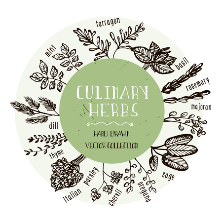 Set of Culinary herbs. Hand drawn herbs collection. Vector Illustration Ilustração