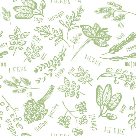 Seamless pattern with hand drawn spicy herbs. Culinary kitchen background with herbs. Perfectly look on kitchen textile, fabric. Vector illustration Illustration