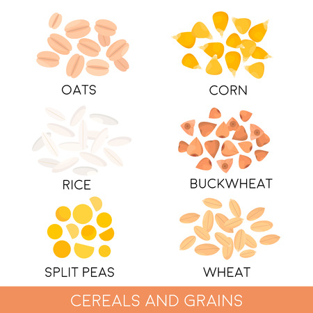 Cereals and grain, oats, rice, corn, split peas, wheat, buckwheat isolated. Vector illustration