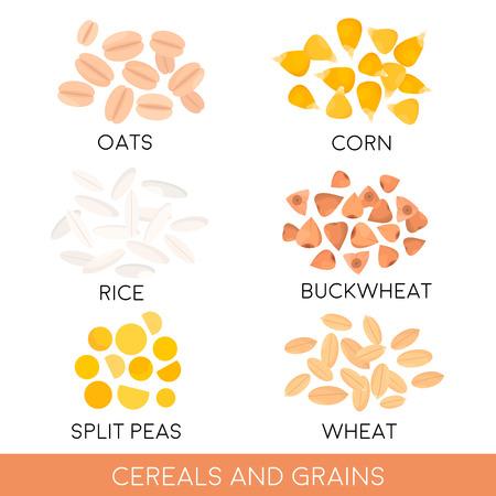 rice grain: Cereals and grain, oats, rice, corn, split peas, wheat, buckwheat isolated. Vector illustration