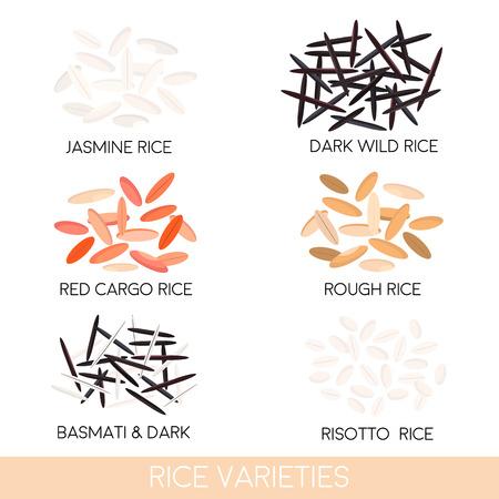 jasmine rice: Rice varieties. Dark wild rice, risotto rice, jasmine rice, basmati, red cargo rice, rough rice isolated. Vector illustration Illustration