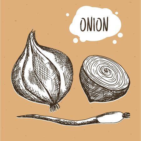 craft paper: Cebolla en el estilo vintage grabado. cebolla en papel marr�n del arte. ilustraci�n
