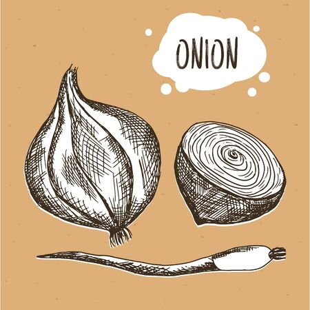Onion in engraving vintage style.  onion on brown craft paper. illustration
