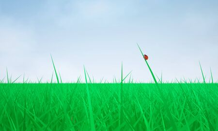 The Three-dimensional Scene: Green Grass and Blue Sky Stock Photo - 18560475