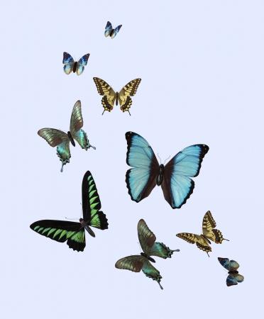Vielfalt der dreidimensionale Schmetterlinge Lizenzfreie Bilder