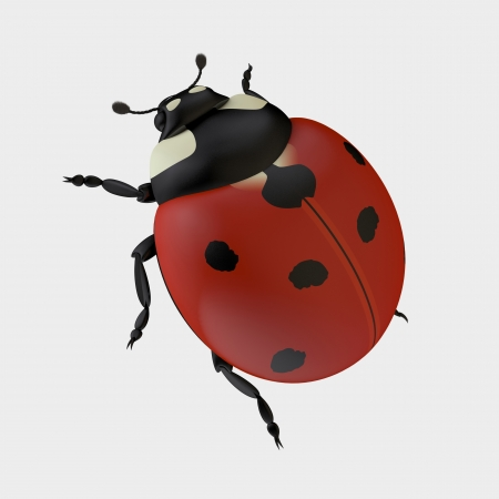 The Three-dimensional Ladybug Isolated on the White Stock Photo