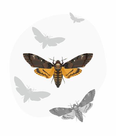 Die Vektor-Illustration der Totenkopfschw�rmer (Deaths Kopf Hawk Motte)
