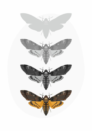 entomologist: The vector illustration of Acherontia Atropos (Deaths-head Hawk moth) Illustration