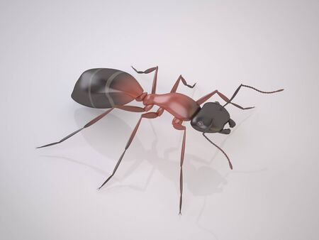 entomologist: The Threedimensional Ant on White Background. Is a Pest. High Resolution 3D Render