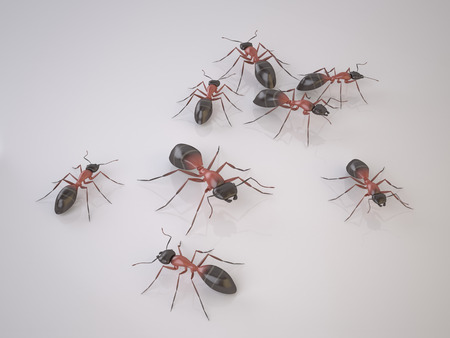 Group of Ants on White Background. Swarm of Insects. Is a Pests. High Resolution 3D Render