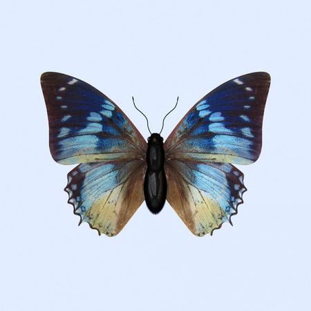 Die dreidimensionale blauer Schmetterling der Nymphalidae Familie, wissenschaftlich als Charaxes Smaragdalis bekannt