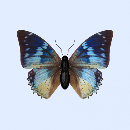 nymphalidae: The Three-dimensional Blue Butterfly of the Nymphalidae Family, scientifically known as Charaxes Smaragdalis Stock Photo