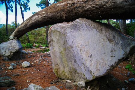 fallen tree: Big stone supporting fallen tree Stock Photo