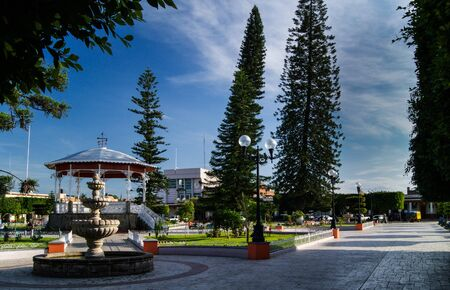 plaza: Tall trees in the plaza Stock Photo