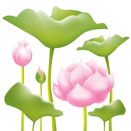 water lilies: Pink water lilies lotus flower or water lilies background