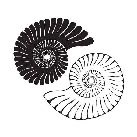 sea shell: Vector sea shells isolated on white background. Art logo design Illustration