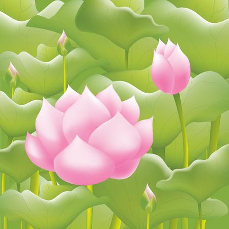water lilies: Pink water lilies lotus flower or water lilies background