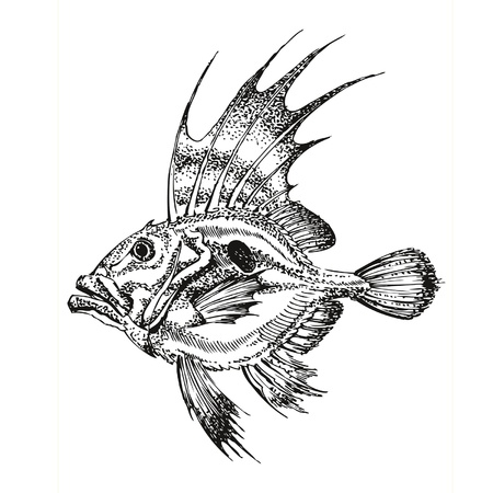 translated: Ink drawing fish, translated into a vector