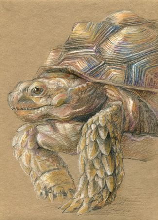 turtle drawn with colored pencils