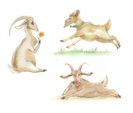 Three cartoon goat, painted in watercolor. Imil and friendly Christmas symbols