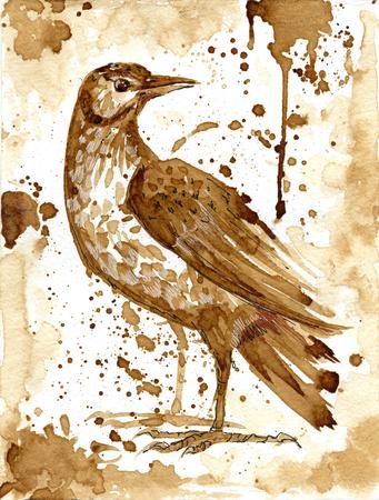 bird thrush drawn coffee