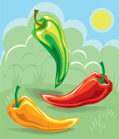a variety of colorful chili peppers on a vegetable background  イラスト・ベクター素材