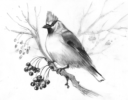 hand-drawn sketch waxwing on a beige background 写真素材