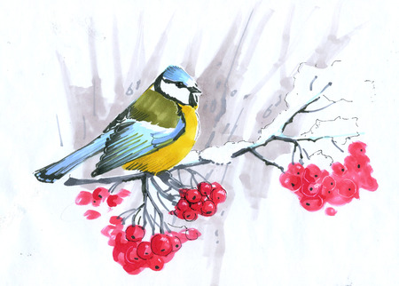 sketch. blue tit sitting on a mountain ash branch with red berries Stock Photo