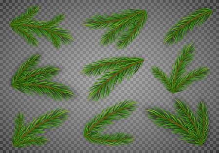 Set of fir branches. Christmas tree, pine. Vector Eps10