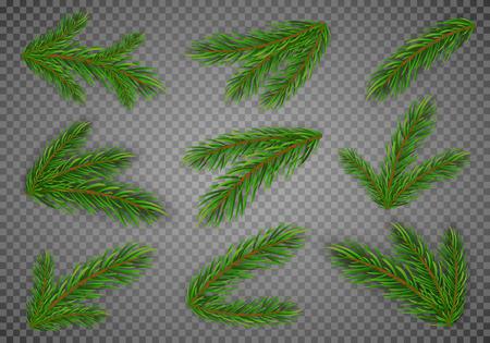 Set von Tannenzweigen. Weihnachtsbaum, Kiefer. Vektor Eps10