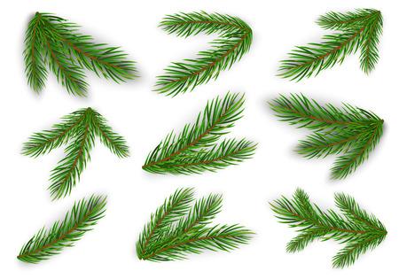 Zestaw gałęzi jodłowych. Choinka, sosna. Wektor Eps10