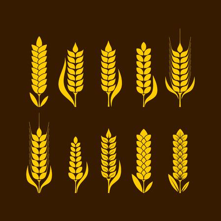 thanksgiving day symbol: Illustrazione e simbolo di grano per il giorno del Ringraziamento
