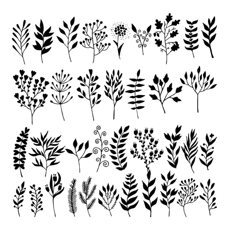 Vector floral elements in doodle style - flowers and leaves. Summer flowers for greeting cards, wedding designs or invitations.