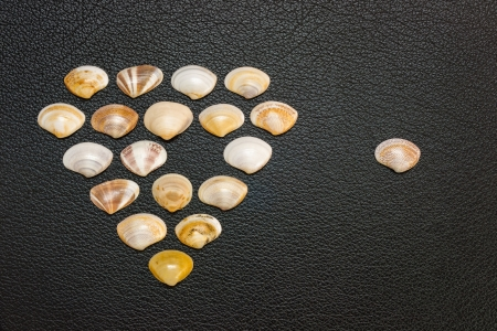 denote: A business concept using clam shells arranged on a black leather surface which can be used to denote vacancy or entry exit of members  The shells are in a diamond pattern indicating a superlative organization or team