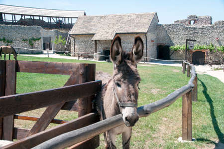 Gray donkey on a lawn with green grass, summer warm day