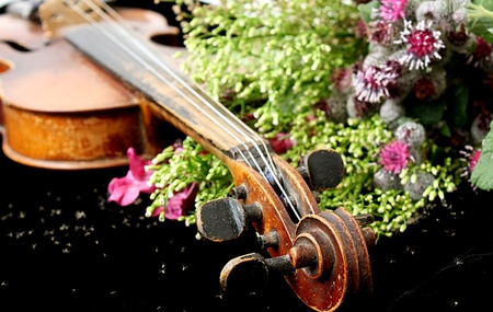 Violin and flowers photo