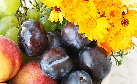 Daisy and plums Stock Photo - 11423035