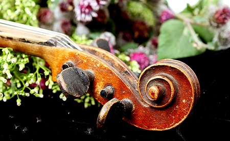 Beautiful violine photo