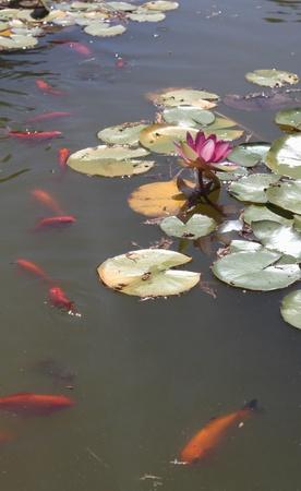 Summer pond Stock Photo - 13441989