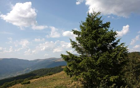 Beautiful fir tree Stock Photo