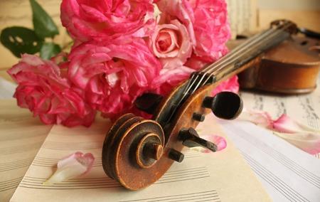 Beautiful violin photo